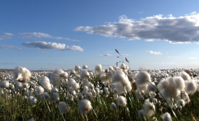 Cone Denim, Oritain, trazabilidad del algodón