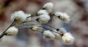 ICAC, International Cotton Advisory Committee, ICAC Cotton Researcher Award, Dr. John Zhihong Yu, estudio genético del algodón, Conferencia de la ICAC