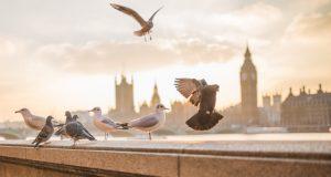 Gran Bretaña, textil/confección en Gran Bretaña, Brexit, Unión Europea, Boris Johnson, Euratex