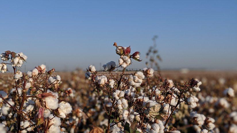 Kering, Common Objective, Biodiversity Impact Metric Tool, sostenibilidad, circularidad, moda sostenible, algodón sostenible